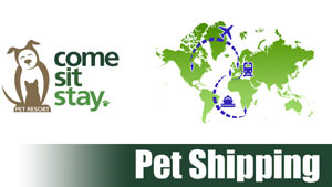 Pet-Transport_300x169