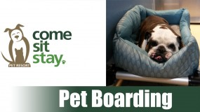 Dog & Cat Boarding Rates